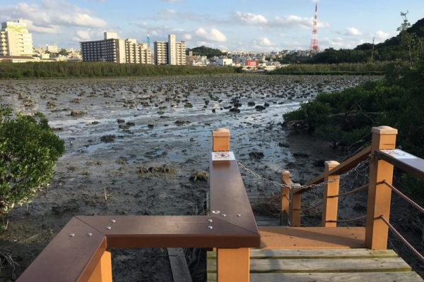 マングローブから湿地を守れるか